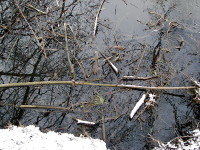 Food storage (food raft) of a beaver (river Ohre near Brome, district Gifhorn).